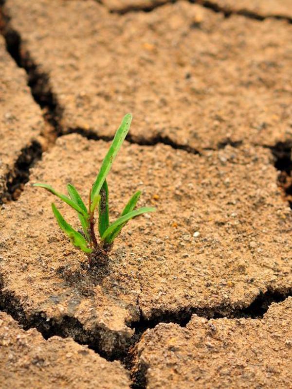 Descubren que los niños son más vulnerables a los efectos del cambio climático