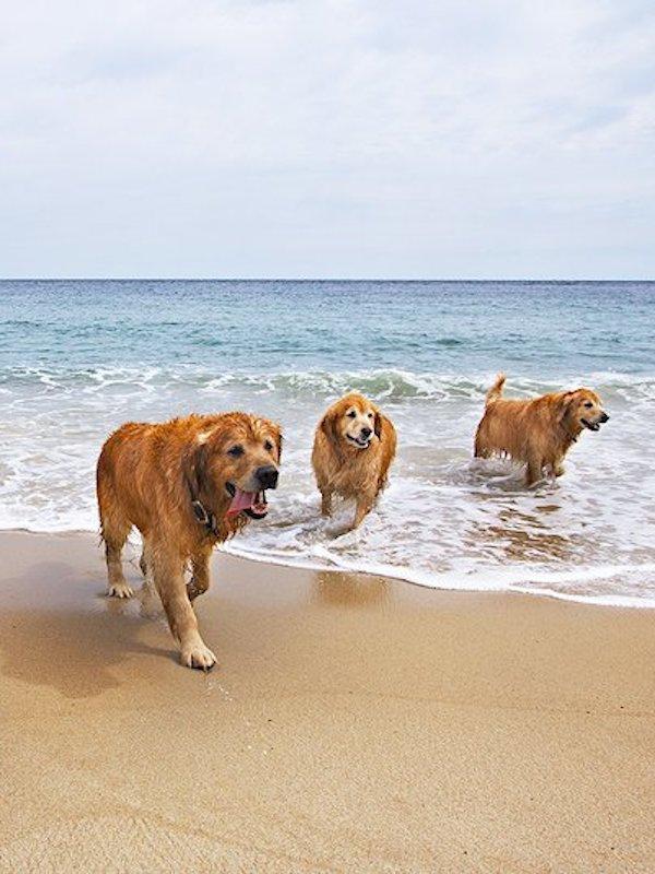 Concentraciones en las playas españolas  #PlayasParaTodos