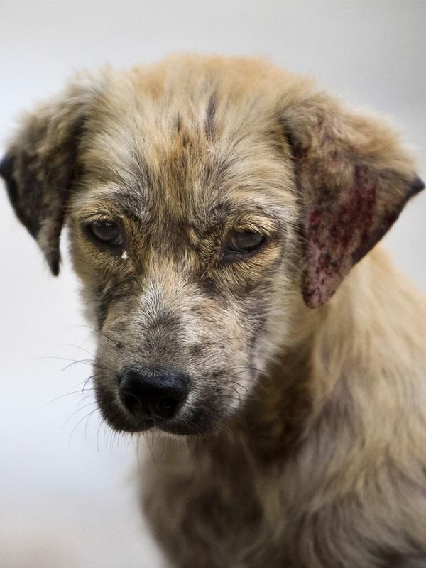El abandono de animales de compañía se estabiliza en España