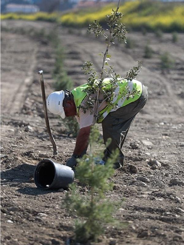 Fundación Aquae planta 8.000 árboles desde 2015 para recuperar la superficie arrasada por el fuego