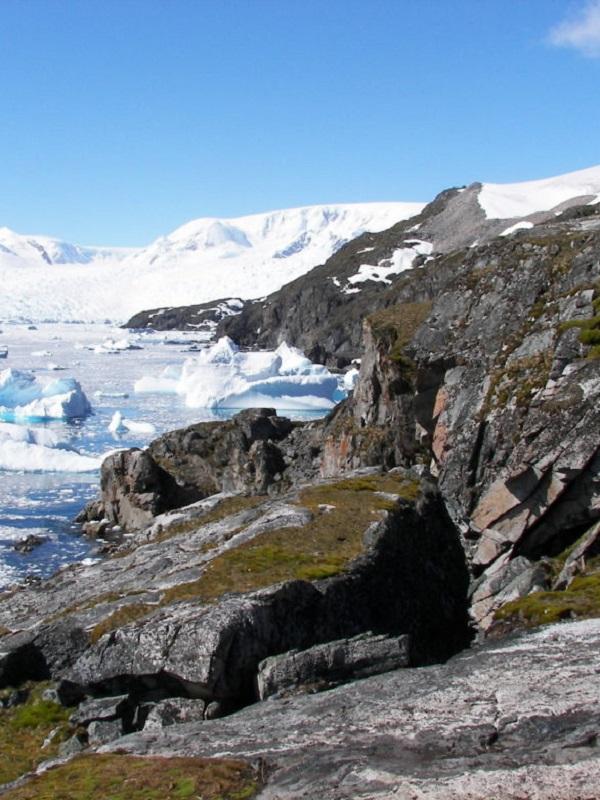 La vegetación crecerá de forma estratosférica en las tierras árticas para 2100