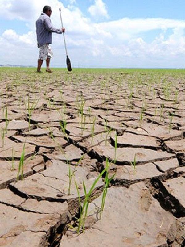 La geoingeniería solar no protege los cultivos del calentamiento global