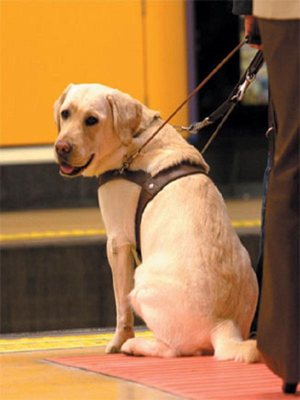 Los perros asistentes podrán subir a los autobuses en Oviedo