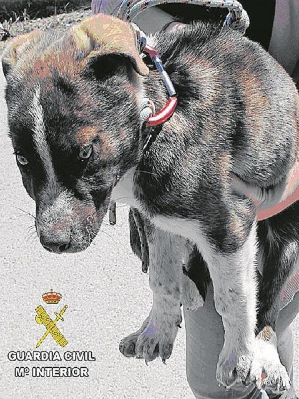 Investigado un energumeno por tirar a un cachorro mastín de tres meses por un puente en Jérica