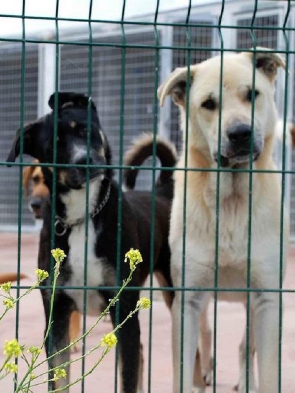 Aprobada la convocatoria de subvenciones de bienestar animal en Torrelavega