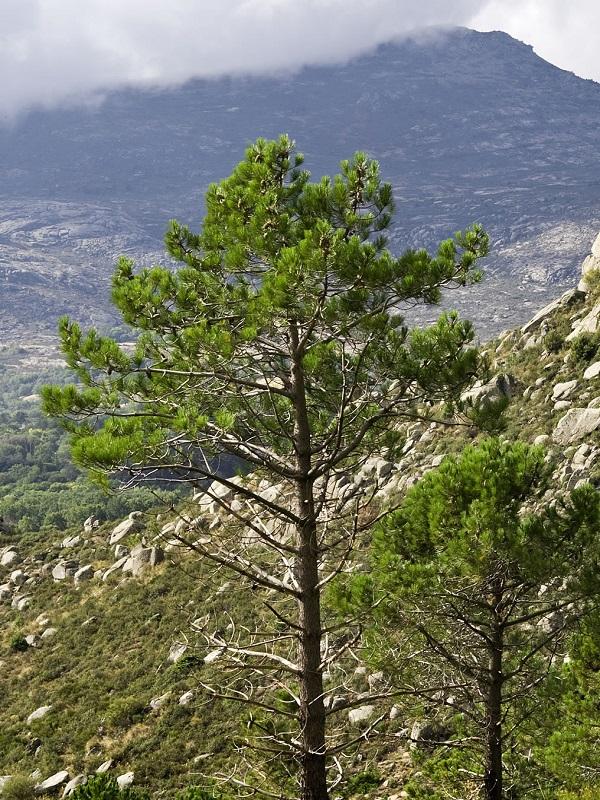 Tecnología verde para pasear virtualmente por 15 rutas de la Sierra de Guadarrama