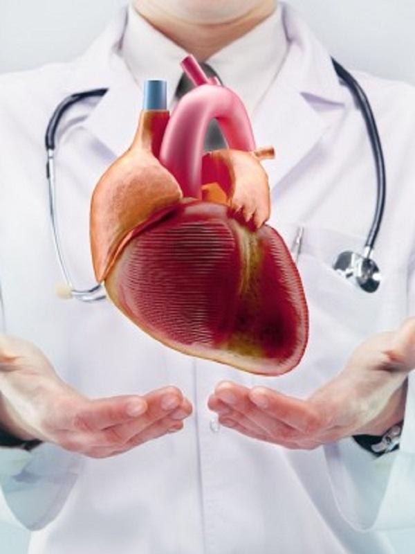 El contacto con el arsénico, plomo, cobre y cadmio es letal para el corazón