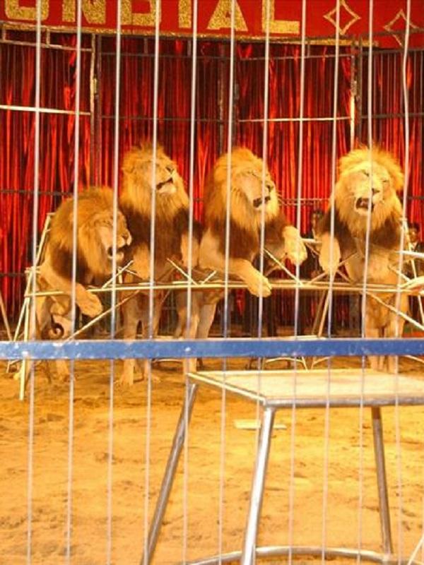 Extremadura prohíbe los circos con animales salvajes