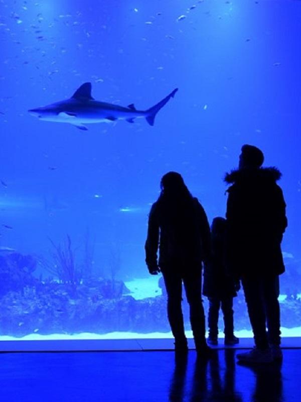 Atlantis Aquarium concienciación sobre cambio climático