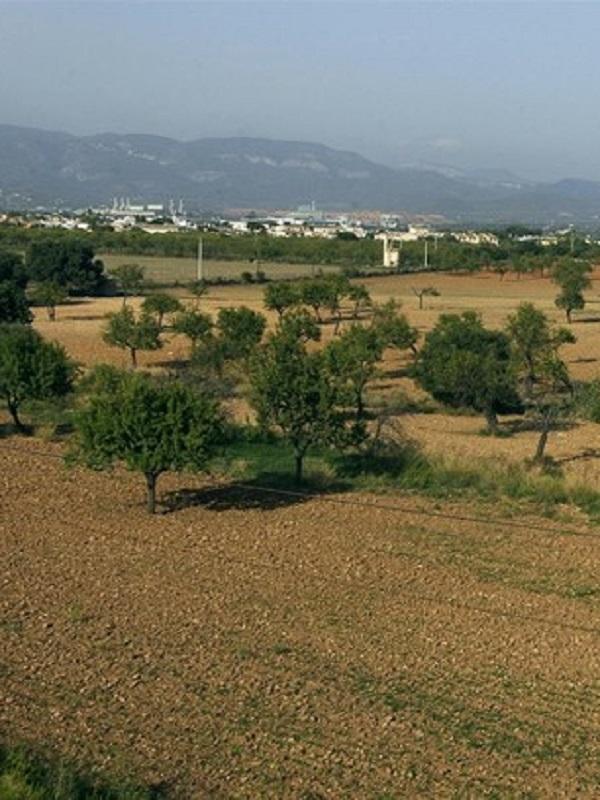 Ya han abierto la convocatoria de ayudas para la conservación y mantenimiento del paisaje agrario de Baleares