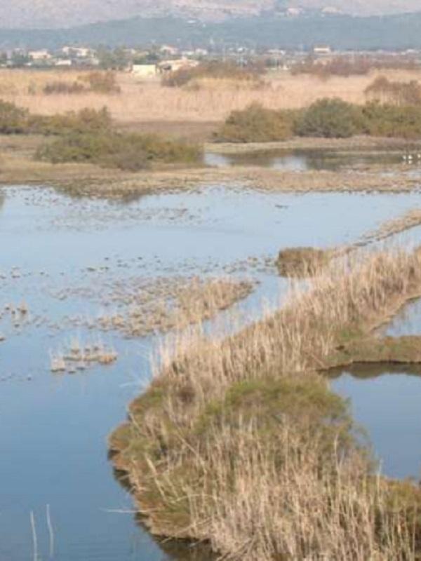 """La Albufera de Mallorca a sido catalogada como """"Zona Importante para Aves y Biodiversidad en peligro"""""""
