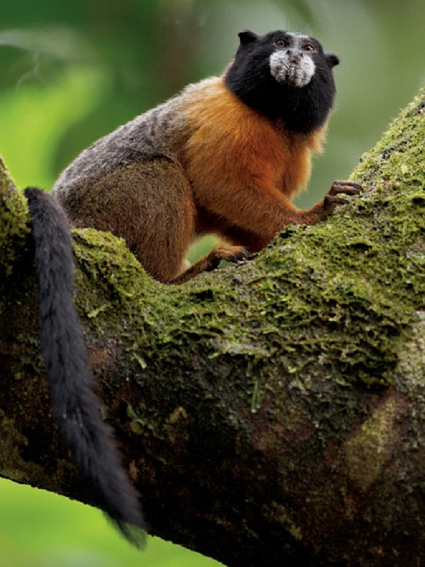 WWF pide un acuerdo mas ambicioso para frenar la pérdida de biodiversidad en el año 2020 tras el débil acuerdo conseguido de la  COP14 de Egipto