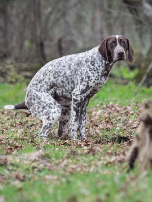 Icoval alerta de que los test de ADN contra las  heces caninas no son eficaces y plantean dudas jurídicas
