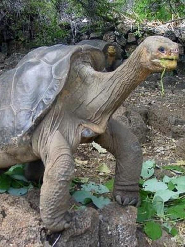 Todos los secretos de la tortuga gigante 'George'