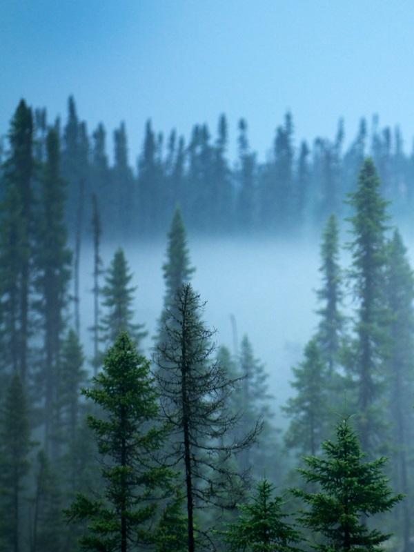 Menos nieve invernal reduce la absorción de CO2 por los bosques