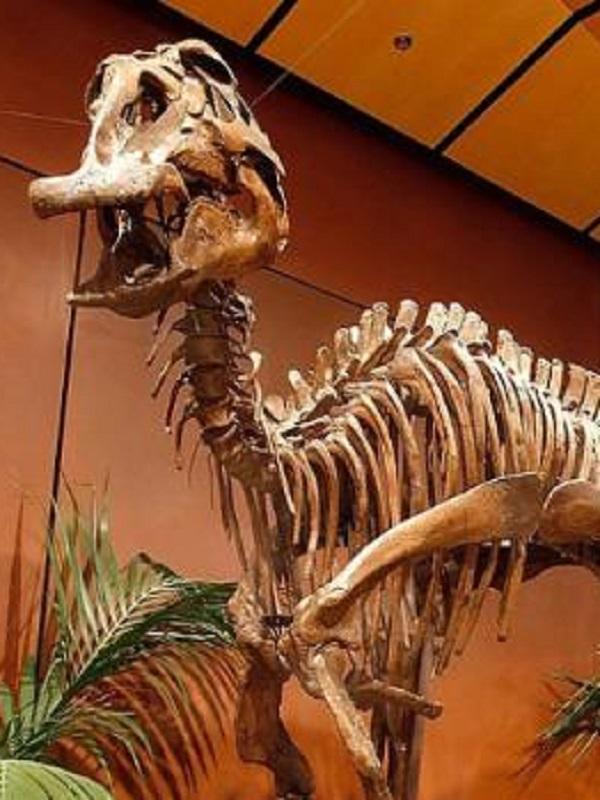 La española que va a revolucionar las colecciones de fósiles de los museos