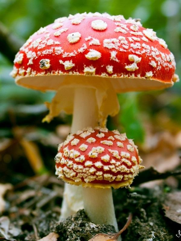La ciencia de los hongos
