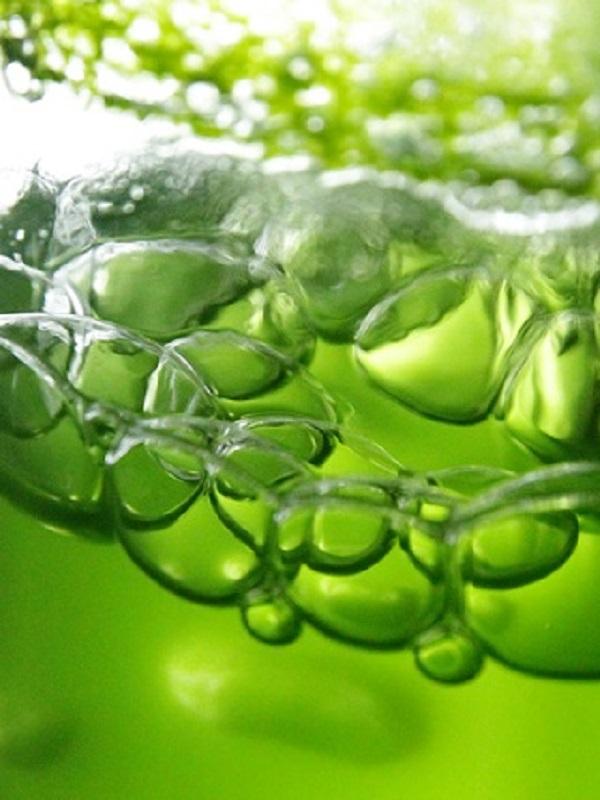 El Imida desarrolla un proyecto para producir piensos acuícolas naturales suplementados con microalgas marinas