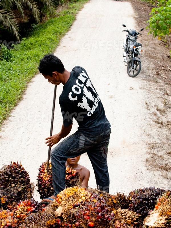 Wilmar International publica un plan de acción detallado para mapear y monitorizar a sus proveedores de aceite de palma