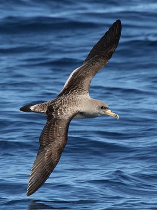 La industria pesquera es una pesadilla para las aves marinas