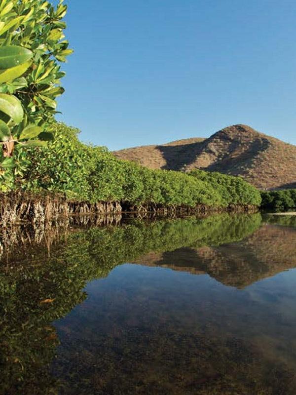 Científicos monitorean manglares del Parque Nacional Archipiélago de Espíritu Santo