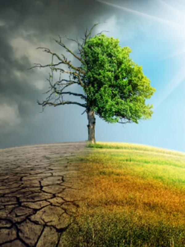 Recta final de la COP24 con pocos visos de acuerdo ambicioso contra el cambio climático