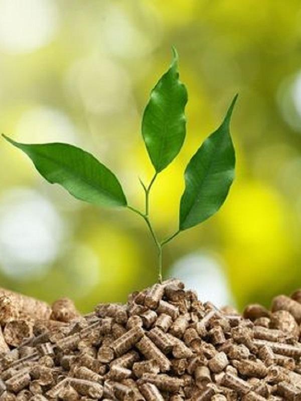 Castilla – La Mancha prepara un decreto para la utilización de biomasa en todos los edificios públicos regionales