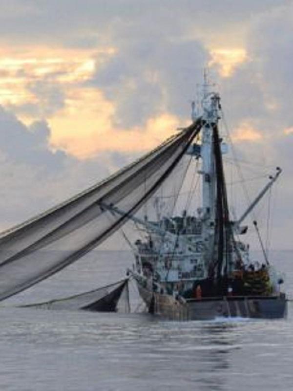 Europa está muy lejos de cumplir los objetivos para una gestión sostenible de la pesca