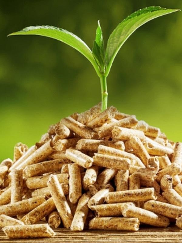 La biomasa debe tener mayor peso en el mix energético nacional
