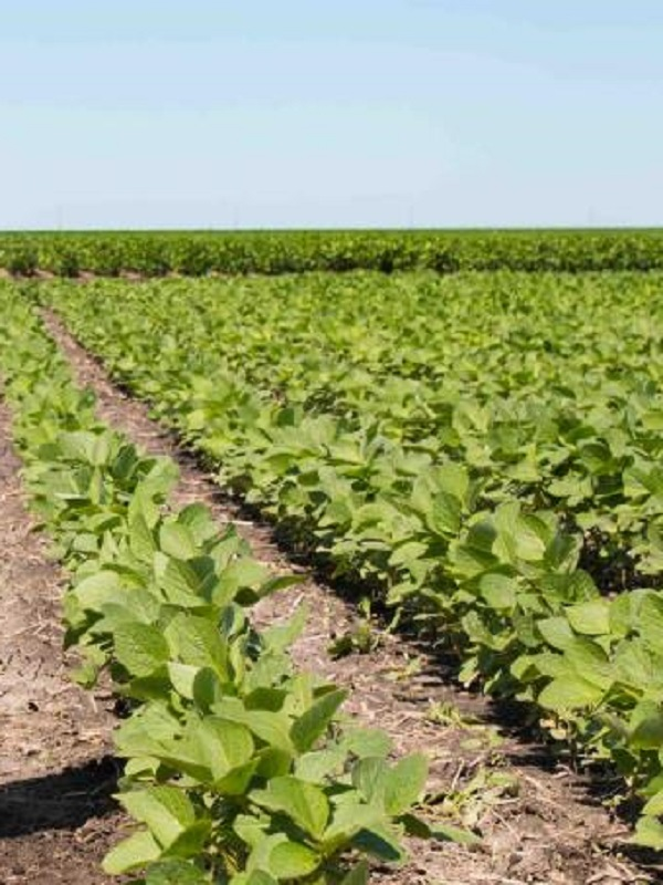 Los agricultores plantan el futuro de la investigación euromediterrània