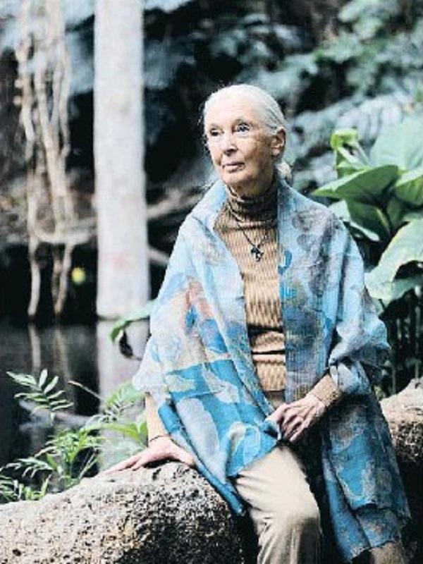 Jane Goodall alerta del tráfico ilegal de especies, sobre todo de países asiáticos