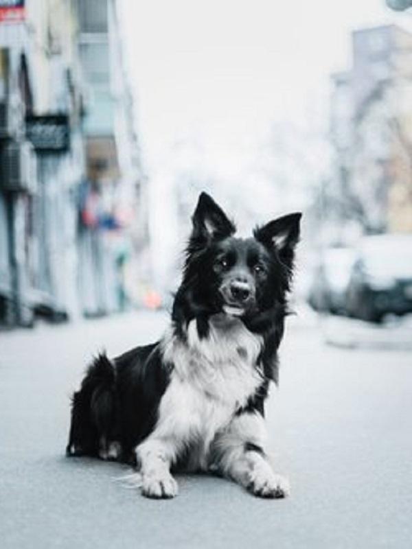 Exigen en Madrid el endurecimiento de las leyes contra el abandono animal