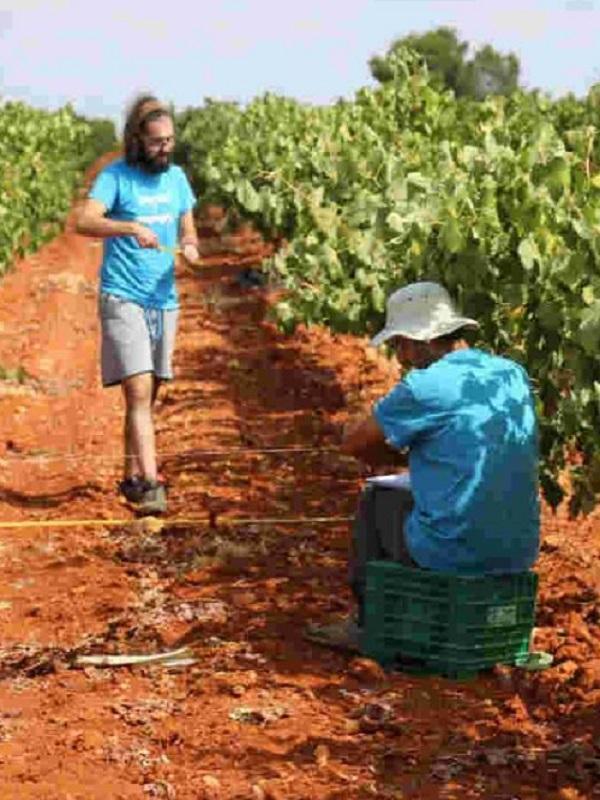 Un método sencillo y económico mide la erosión en los cultivos vitivinícolas