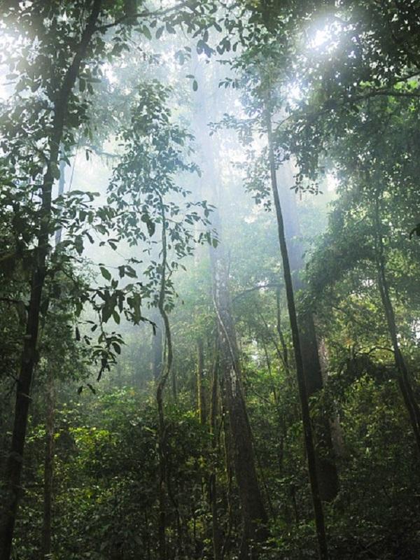 Los bosques tropicales aumentan la capacidad de secuestrar carbono de la Tierra