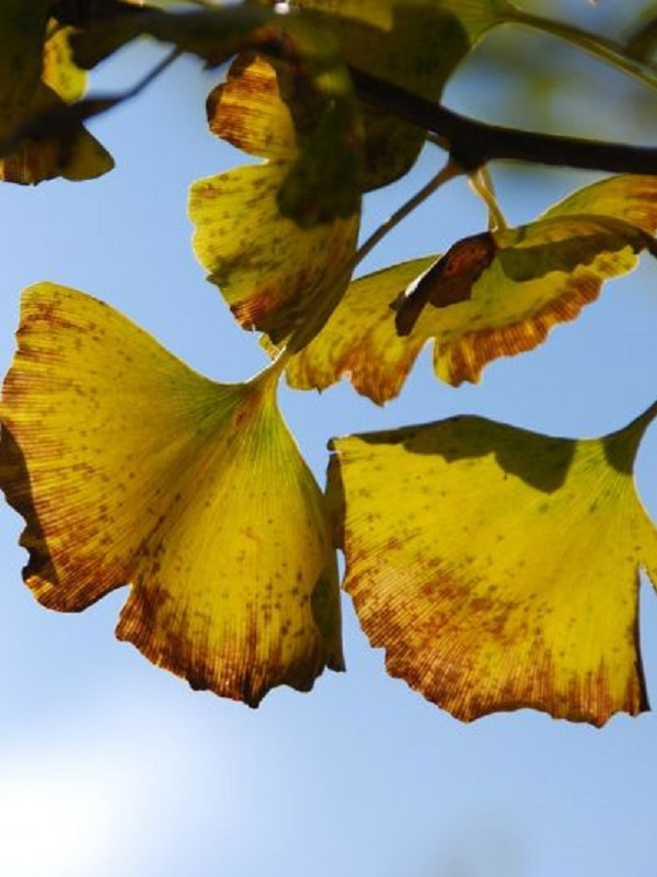 El clima estable favoreció la supervivencia de plantas en China