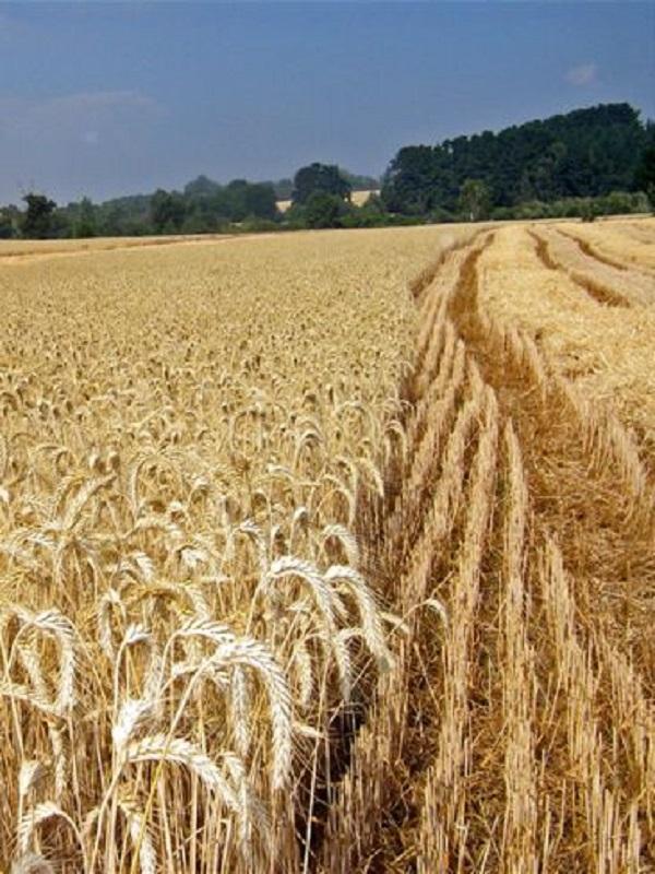 ¿En los próximos 30 años seremos capaces de alimentar al mundo sin destruirlo?