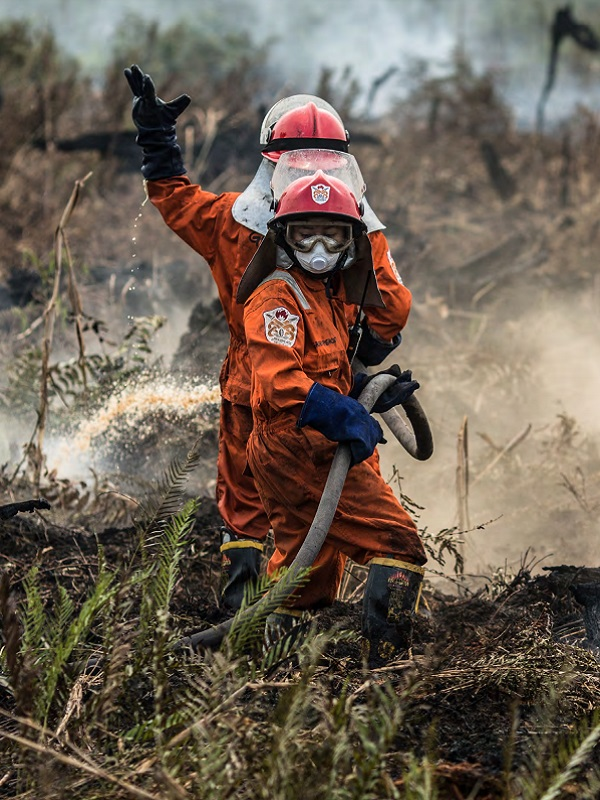 Balance: incendios forestales en 2018