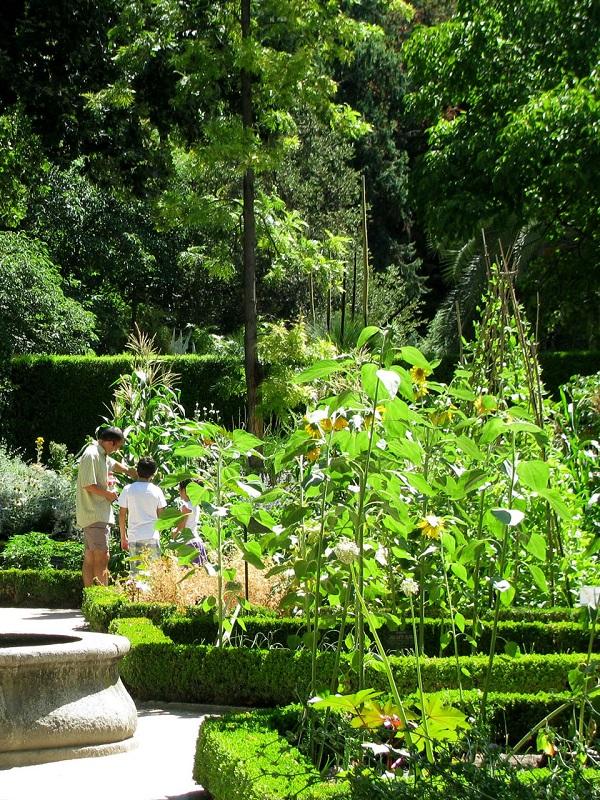 Una docena de proyectos de doctorandos en el Real Jardín Botánico, publicados en la revista anual del RJB