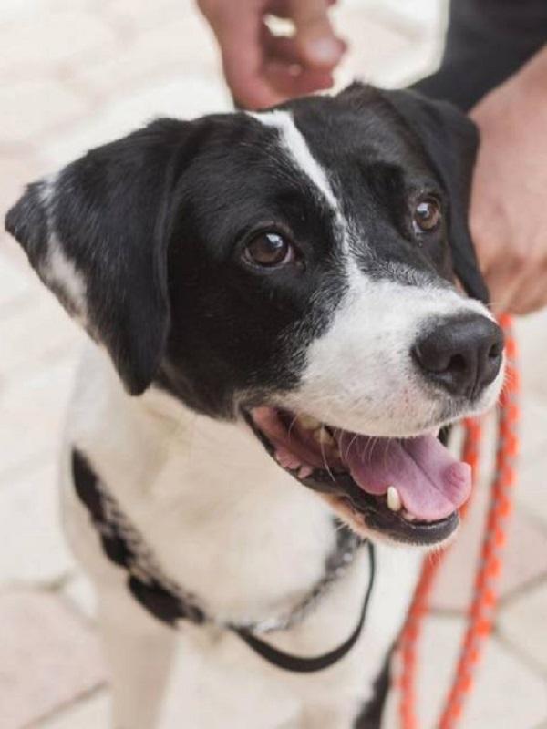 'Endoor', la perrita adoptada 13 años después de ser rescatada por El Refugio