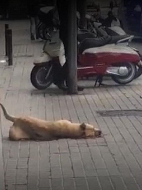 Libera! interpone denuncia penal por la muerte de un disparo de la perra Sota en Barcelona