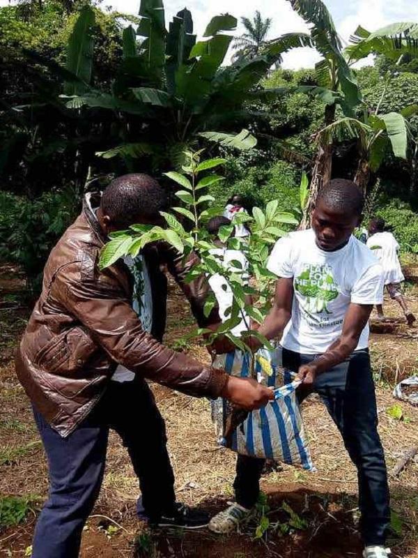 Propósito de Año Nuevo: plantar un billón de árboles