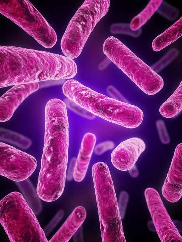 La mayoría de los virus y bacterias viajan por la atmósfera miles de km
