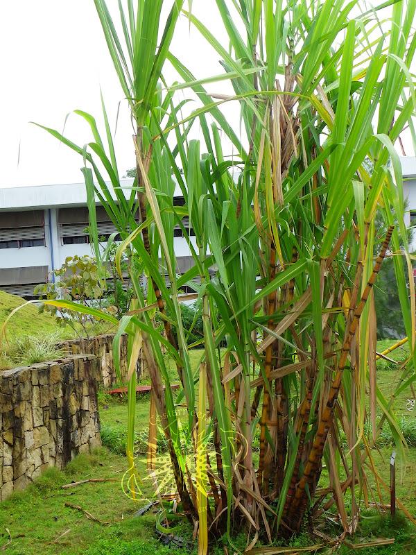 Tecnología Verde para fabricar tableros de madera más sostenibles