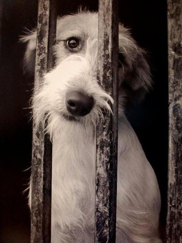 Dos buses de la EMT difundirán una campaña de Cort y Baldea contra el abandono de animales de compañía