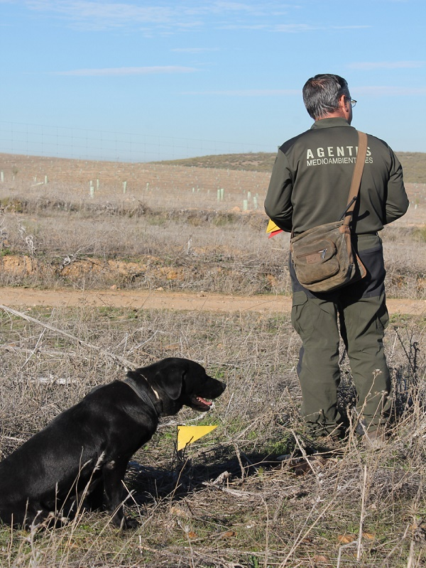 Ingente labor de la unidad canina andaluza de detección de cebos envenenados