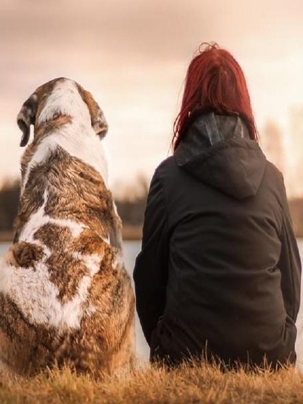 La Diputación de Málaga podría implementar parques caninos en municipios menores de 20.000 habitantes