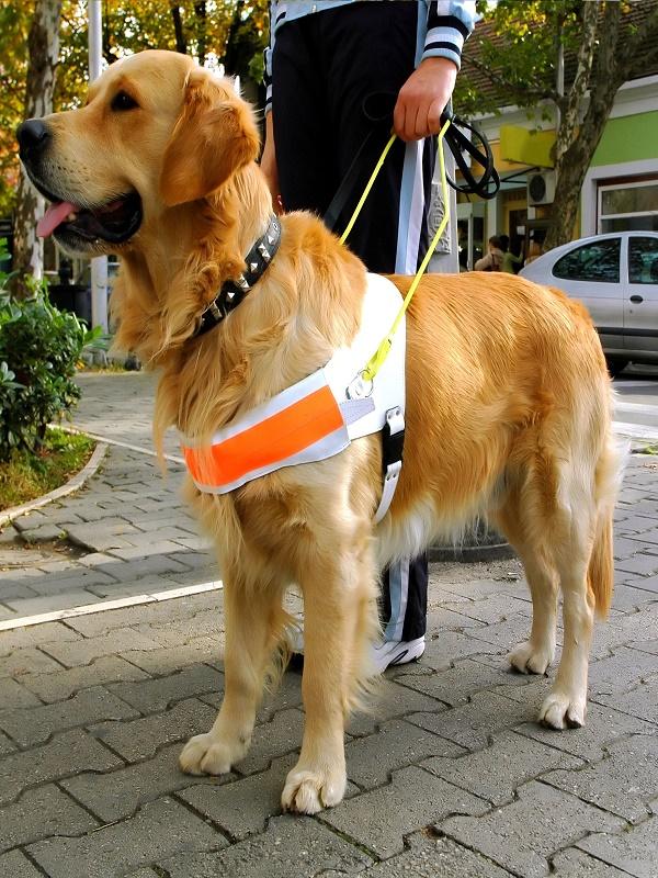 Las nefastas consecuencias del botellón para los perros guía