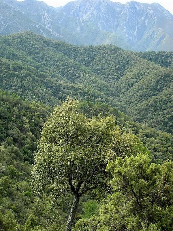 Aprobada la propuesta inicial para declarar la Sierra de las Nieves como Parque Nacional