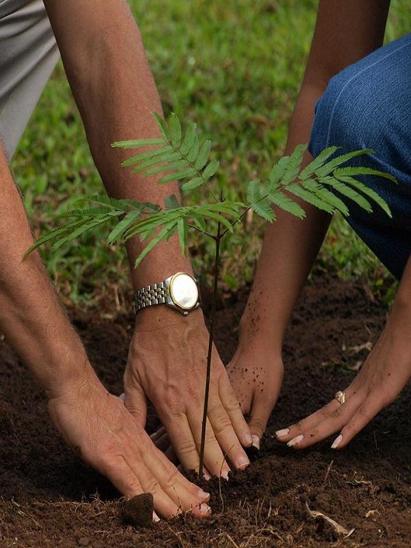 Reforestación participativa en Bormujos