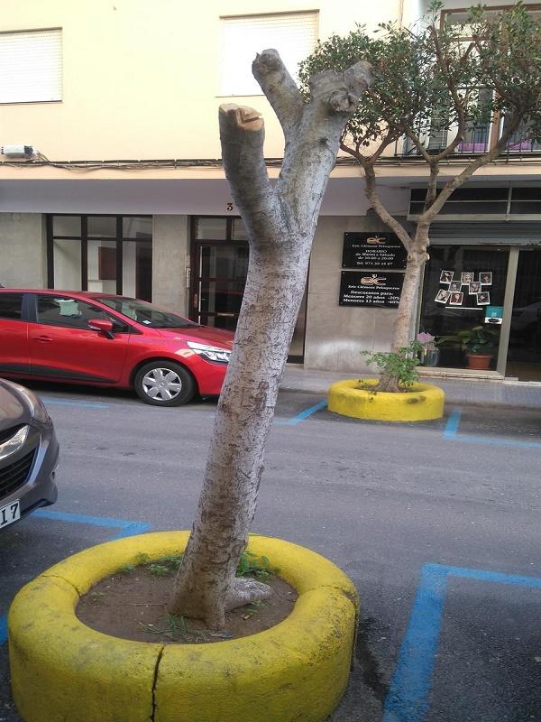 Tala de árboles sanos en Ibiza